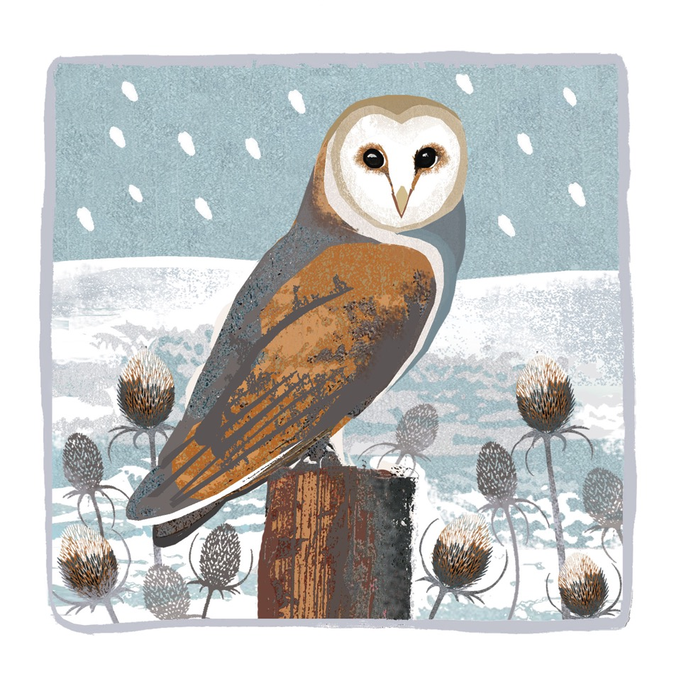 deva evans pure illustration owl